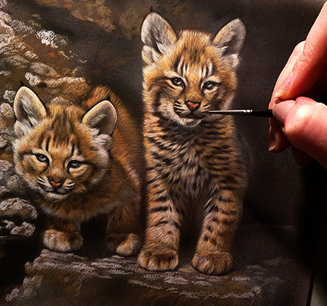 Bobcat Kittens Watercolor Painting in Progress - Rebecca Latham