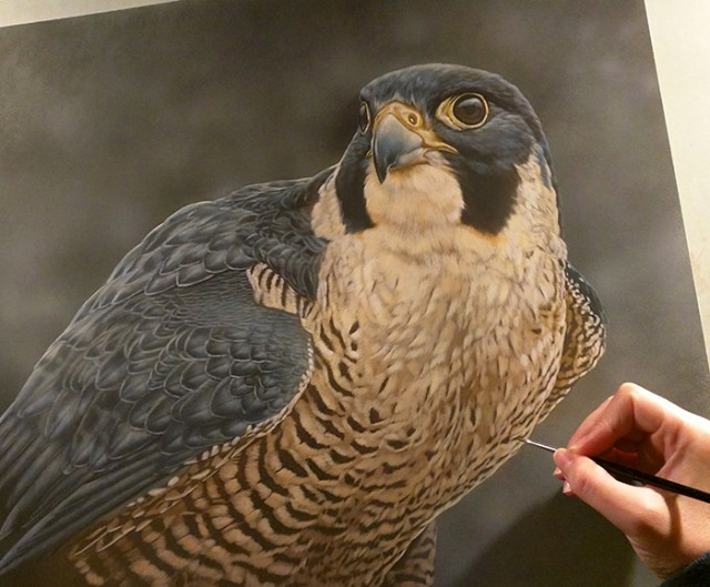 Peregrine Falcon Watercolor Painting - Rebecca Latham