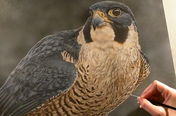 Peregrine Falcon Watercolor Painting - Rebecca Latham