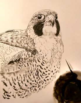 New Peregrine Painting, 9x12, Sepia Stage, Rebecca Latham