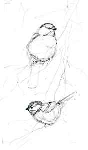 Songbird sketches - Rebecca Latham