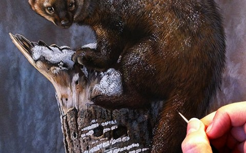 Peek In The Studio – Wolf, Bear, Raccoon, Fisher