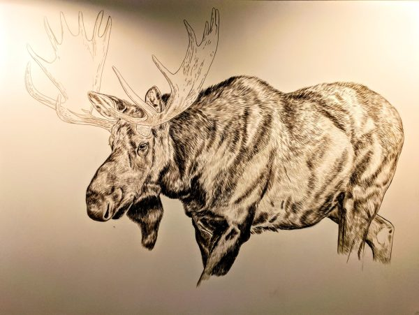 Bull Moose (Presently Untitled) in progress, 30x40in, watercolor on board