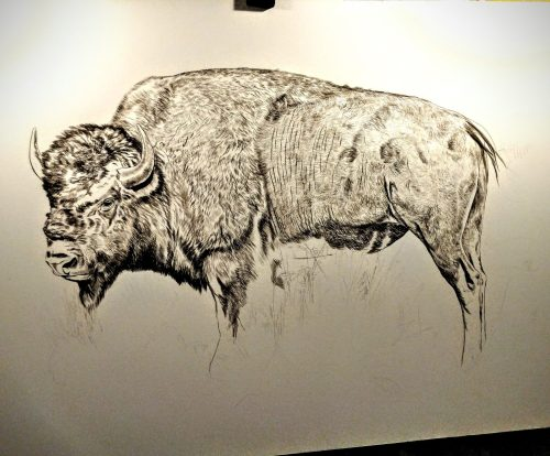Bull Bison (Presently Untitled) in progress, 36x24in, watercolor on board