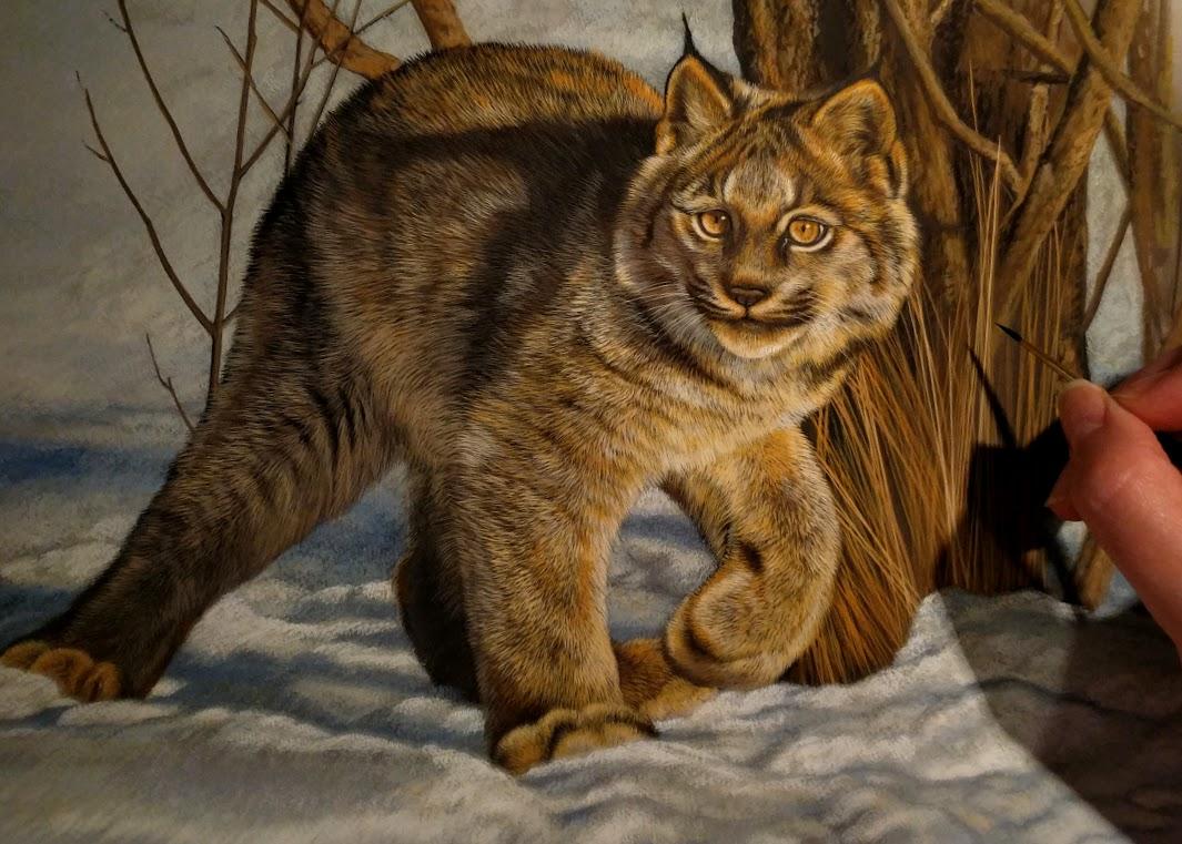 Works in Progress – Canadian Lynx & Great Horned Owl