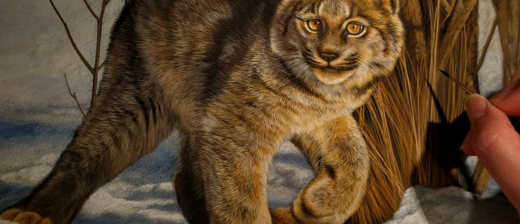 Canadian Lynx watercolor in progress by Rebecca Latham