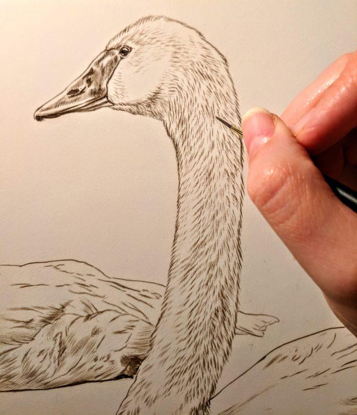 Detail, Trumpeter Swan Pair Work in Progress Sepia Watercolor, Rebecca Latham