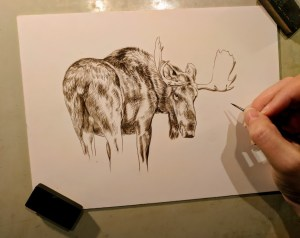 Moose, 6x8, Works in Progress, Sepai stage watercolor, Rebecca Latham