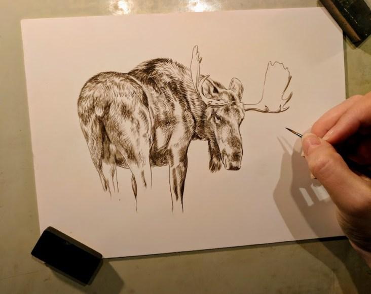 Moose, 6x8, Works in Progress, Sepai stage watercolor, Rebecca Latham