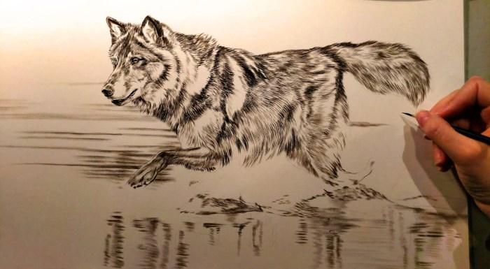 Black Wolf, 10x20, Work in Progress Sepia Watercolor, Rebecca Latham