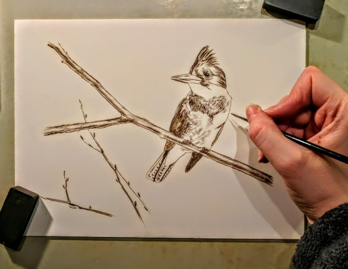 Kingfisher, Work in Progress Sepia Watercolor, Rebecca Latham