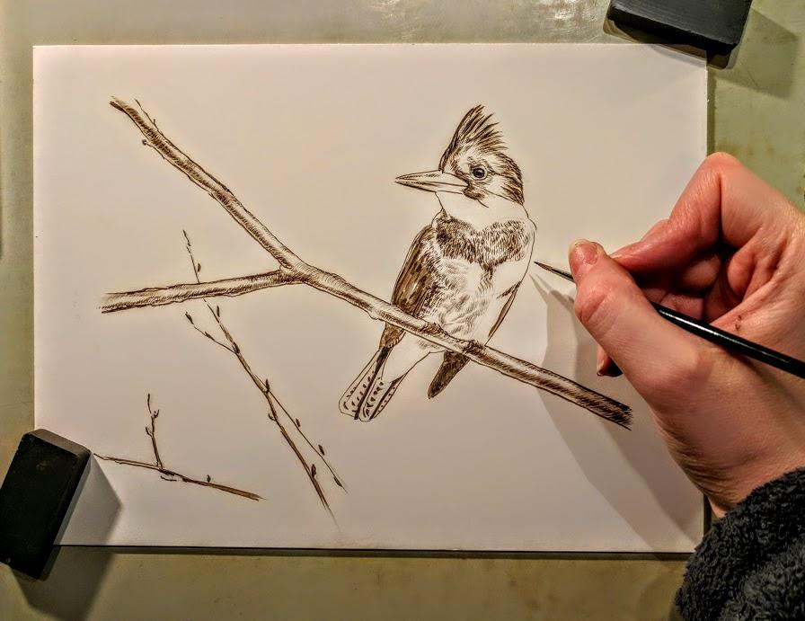 Peek In The Studio – Kingfisher