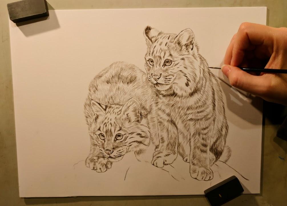 Peek In The Studio – Young Bobcats