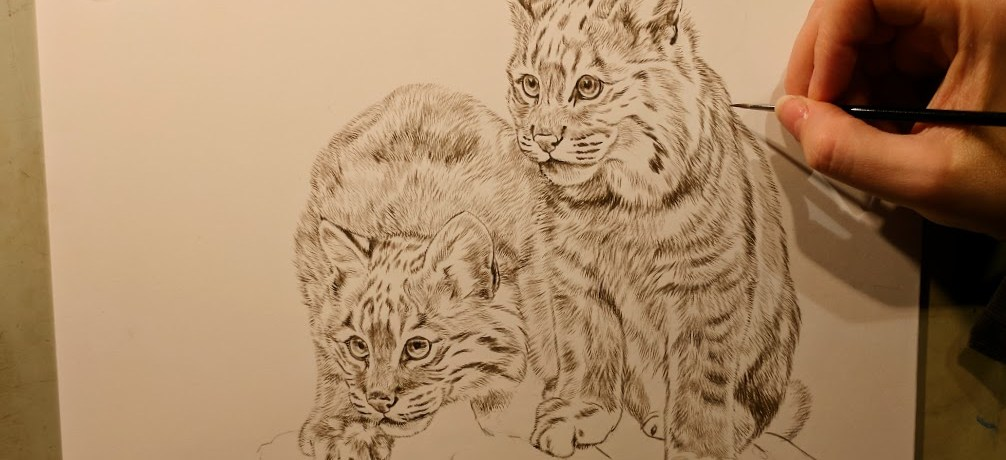 "Bobcats, Work in Progress Sepia Watercolor, 9""x12"", Rebecca Latham"