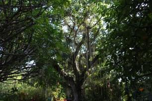 Pinecrest Gardens, Miami, FL