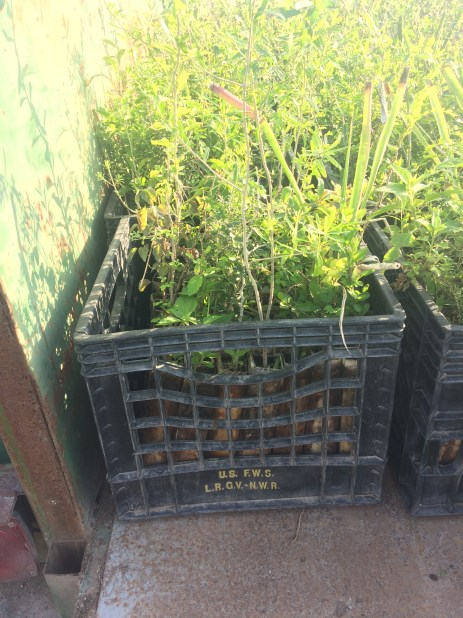 crate of shrubs