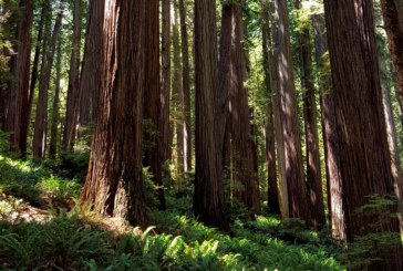 Jedediah Smith Redwoods – Hikes, Drives and Views You Won't Want to Miss