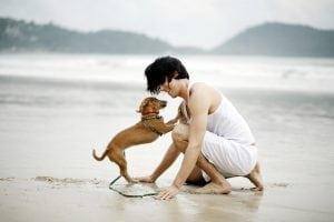 TRAVLEIN WITH PETS.jpg