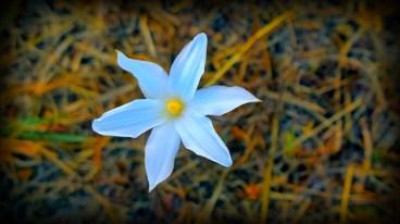 autumnal-white-flower