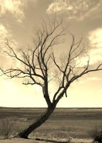 dry-sepia