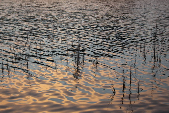 Dusk in the Reeds