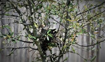 Nesting Mom