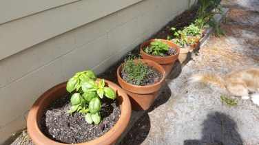 My new herb garden!