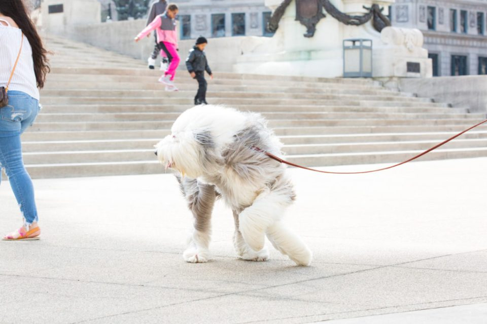 fluffy dog candid photo