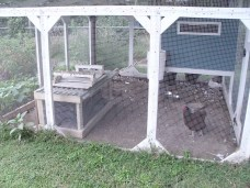 Floofs outside in the new chicken tractor!
