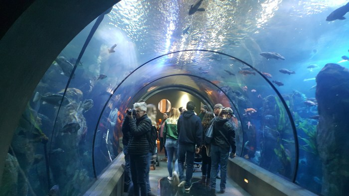 Passages of the Deep Oregon Coast Aquarium