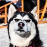 O cão vegano do segundo livro