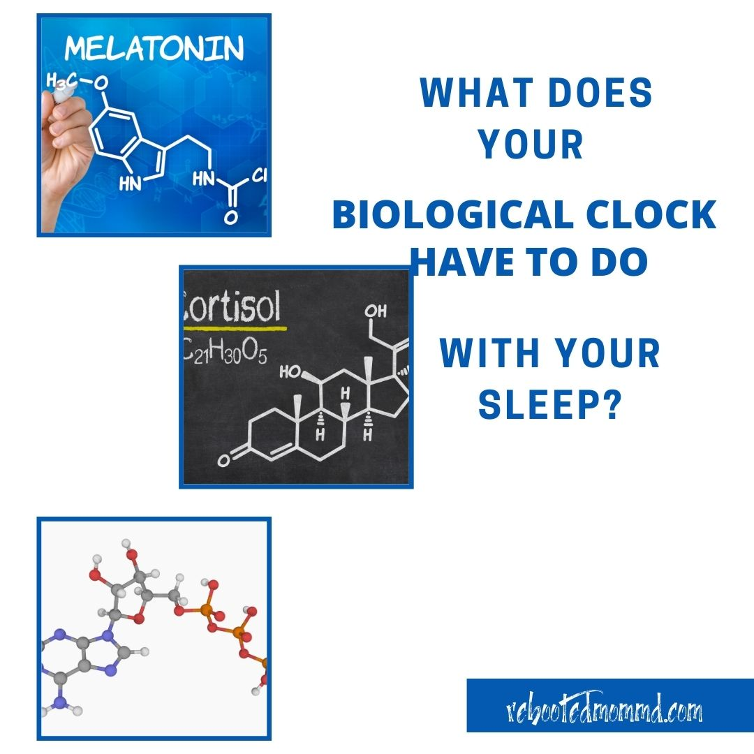 biological clock sleep