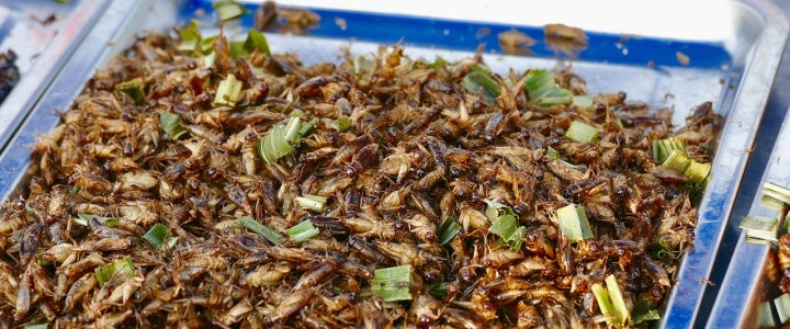 Edible Insects: The Perfect Alternative to Animal Meat