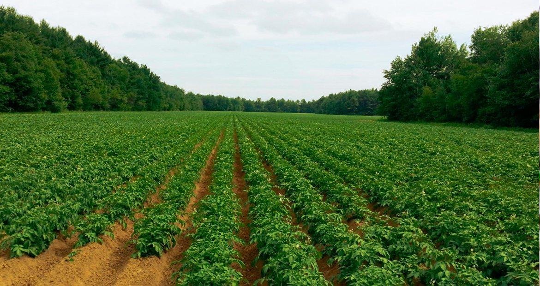 agricultura-inteligente-1920