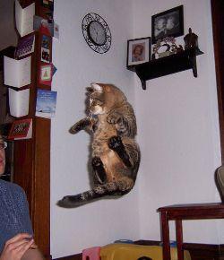 gato no ar.jpg