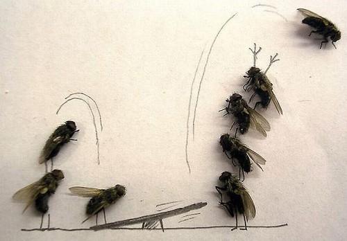 arte-moscas-1