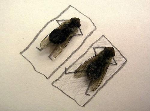 arte-moscas-3