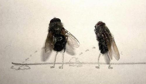arte-moscas-5