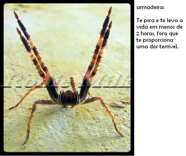 aranha-venenosa-1