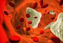 Colesterol é um componente essencial das membranas