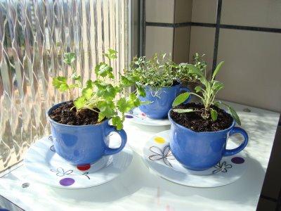 Dicas de Como Cultivar Uma Mini-horta
