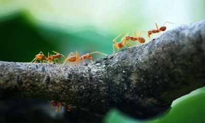 How to Get Rid of Sugar Ants Naturally Forever (and Never See Them Return)