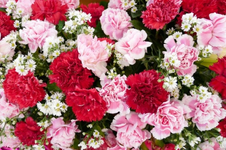 Gorgeous Carnations
