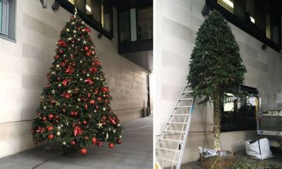 BBC Cut Down Their Christmas Tree Because It Was A 'Security Risk'