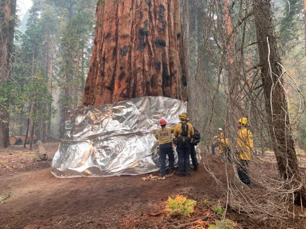 1631898164 323 Sequoia National Park fire Crews wrapping worlds largest trees with