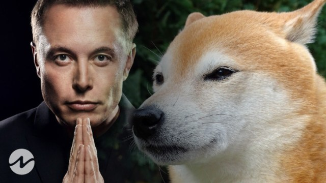 """Major Dogecoin Twitter User Posts """"Dogecoin Community Will Support Musk"""""""