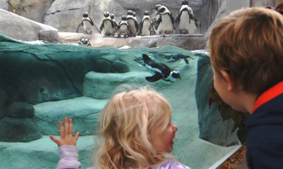 Birds of a flipper: As visitors crowd Denver Zoo, African Penguins are living their best life