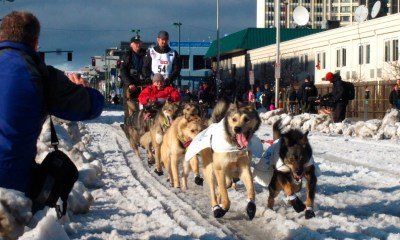 Sled dogs struck, injured by hit-and-run driver in northern Minnesota