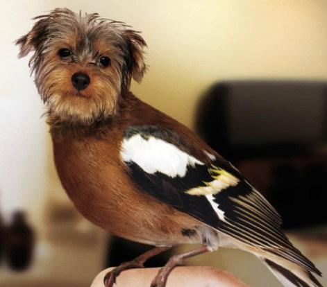 BirdDog11