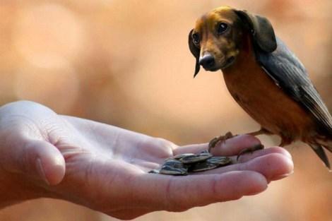 BirdDog13